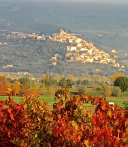 Sagrantino Vines at home in Umbria