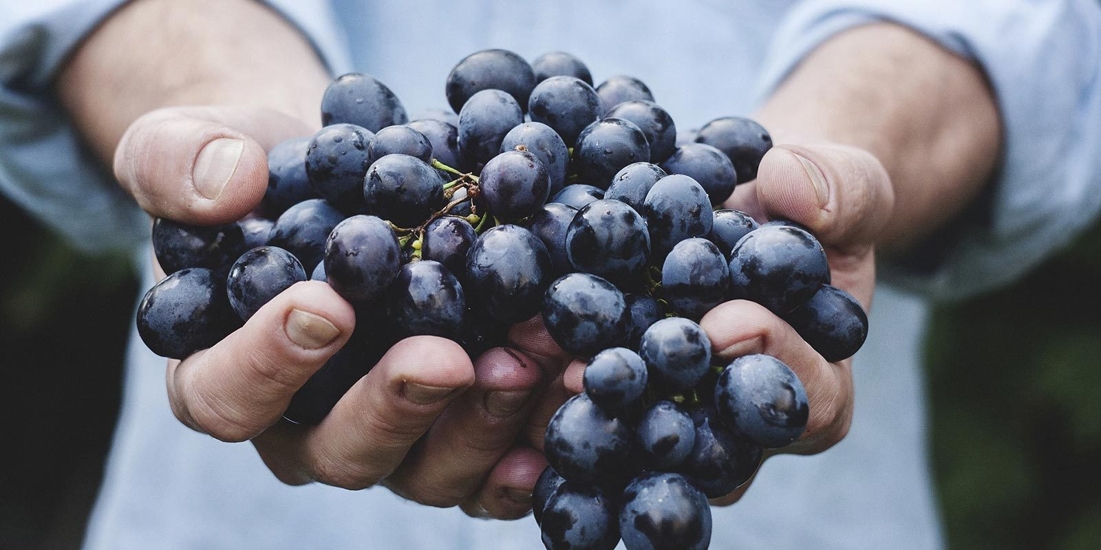 A sip of Umbria with Gusto