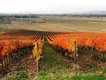 Gusto Wine Tours FAQs