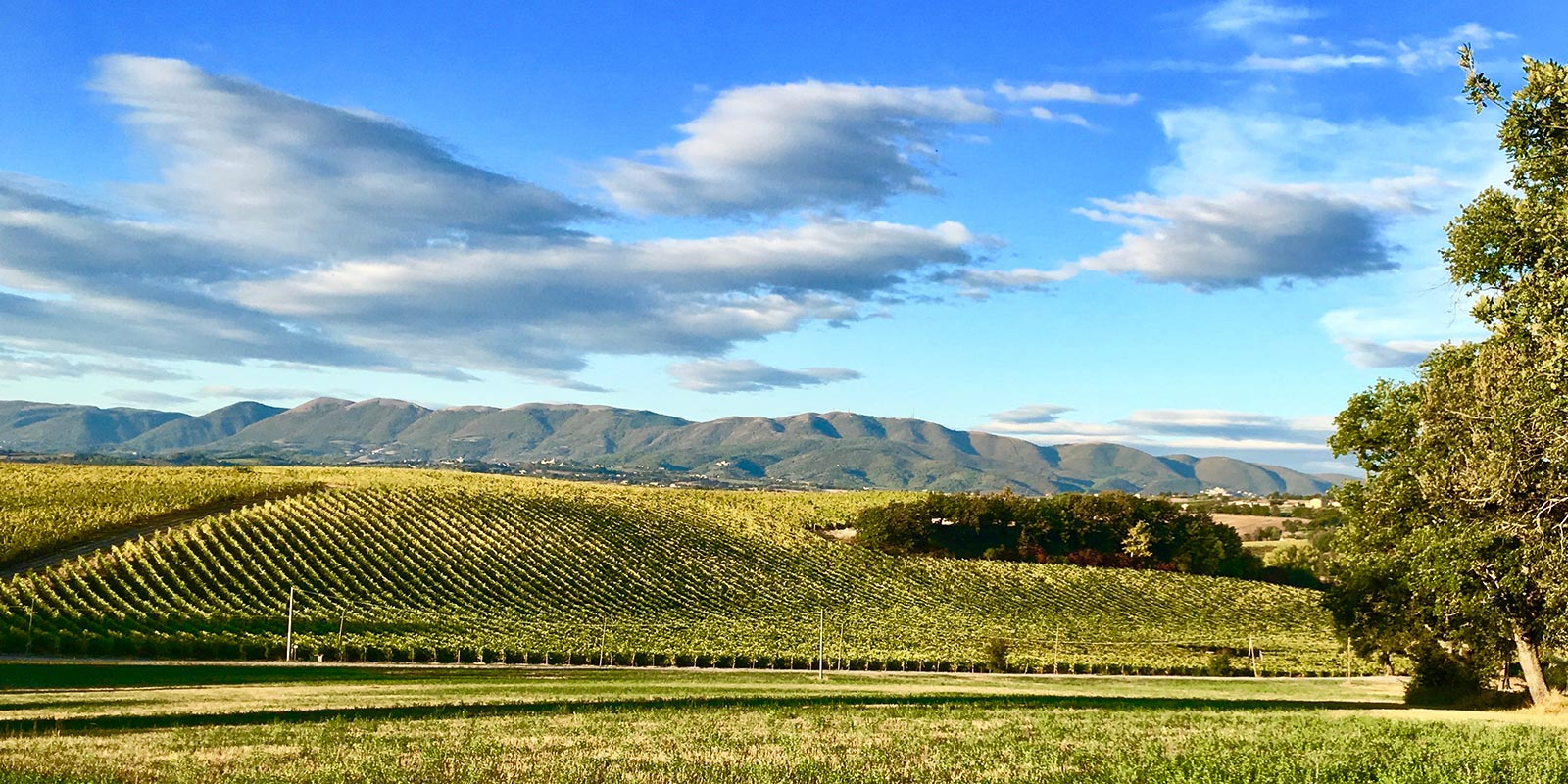 Umbrian Wine Tours - The Tours